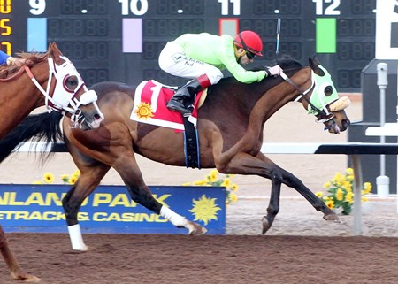 Smack Ridge wins the 38th Running of the Winsham Lad Handicap at Sunland Park in New Mexico.