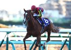 Orfevre takes the 2013 Arima Kinen by eight lengths in his last start before retiring to stud