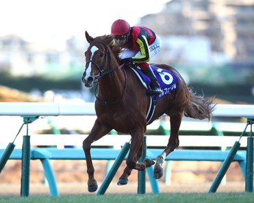 Japanese star Orfevre bowed out of racing in fine style when winning the Arima Kinen (Jpn-I) by a commanding eight lengths at Nakayama in Japan.