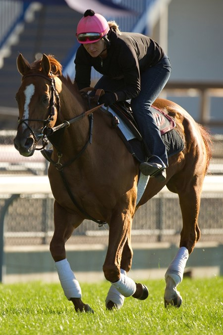 Wise Dan gallops with exercise rider Ruth Schmidt.