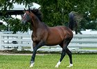 "Cigar<br><a target=""blank"" href=""http://photos.bloodhorse.com/Thoroughbred-Greats/Cigar/i-4PMcZJt"">Order This Photo</a>"