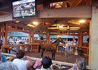 Vic Zast's Saratoga Diary: M'ams and Sirs