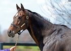 Take Charge Lady at a Central Kentucky farm where she has been bred to War Front in 2014.