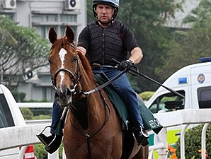 Red Cadeaux jogs April 22 at Shat Tin.