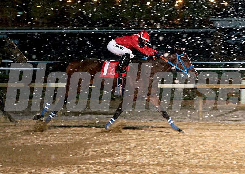 Musicinthehouse dashes through the snow to win the Sophomore Sprint Championship Stakes at Mountaineer in West Virginia.