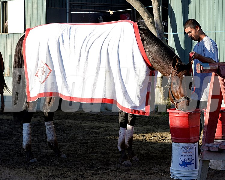 Caption:  Big Macher getting drink of water while being hotwalked. 