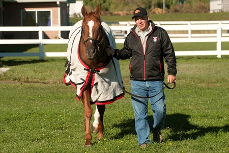 Woodbine Mile favorite and Horse of the Year Wise Dan cools out after his morning gallop at Woodbine Racetrack with trainer Charles LoPresti.
