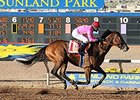 Firing Line wins the 2015 Sunland Park Derby.