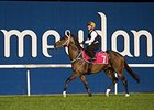 Mubtaahij preps for the UAE Derby at Meydan March 23.