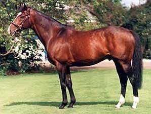 Sadler S Wells Dies Bloodhorse