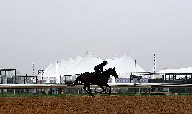 (May 15, 2014) horse working at Pimlico...