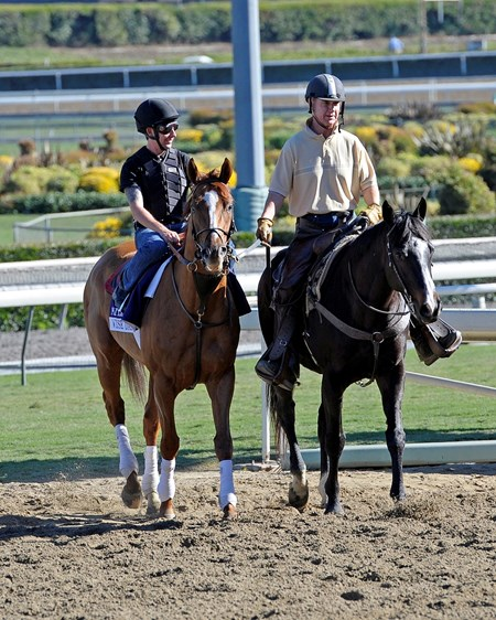 Caption:  Wise Dan coming off turf course