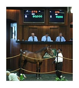 Hip 279, a daughter of Pioneerof the Nile, was one of 2 fillies to sell for $90,000.