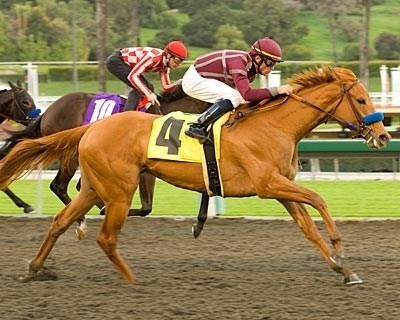 Evita Argentina found the nine males she faced in the $150,000 San Vicente Stakes (gr. II) easy pickings at stormy Santa Anita Feb. 16. Last leaving the quarter pole, the favorite closed with fearlessness down the middle of the track to surge past Leedstheway to win in the final strides.