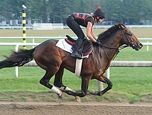 Orb Sharp in Half-Mile Travers Drill
