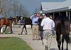 2-year-olds are inspected prior to the April 6-7 sale at Keeneland.