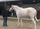 F-T February: Rare White Filly Stands Out