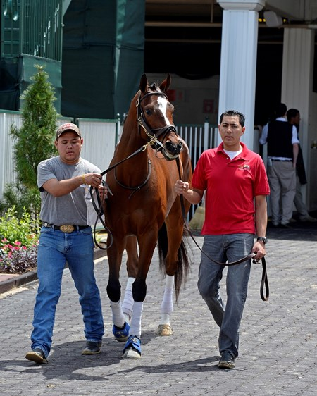 Caption: Untapable schooling in paddock