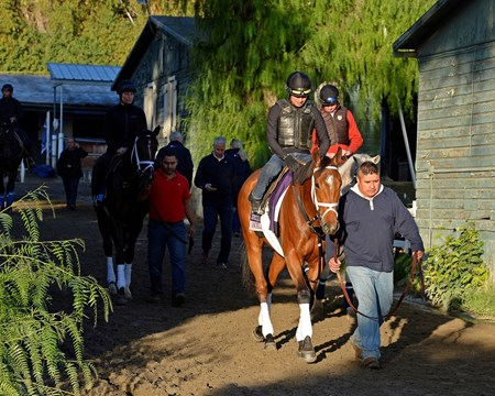 Caption:  Angela Renee and other Pletcher horses walk to the track.