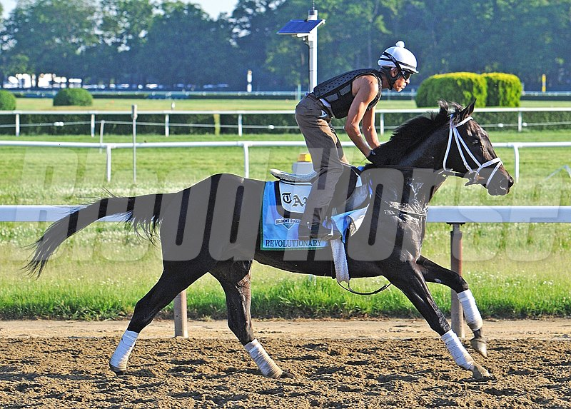 WinStar Farms Revolutionary, third in the Kentucky Derby, at Belmont Saturday morning preparing for Belmont Stakes...