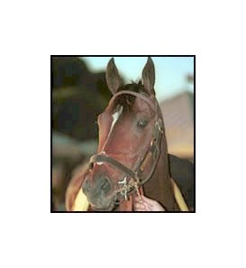 Siphonic, voted top horse at Hollywood Park's autumn meet.