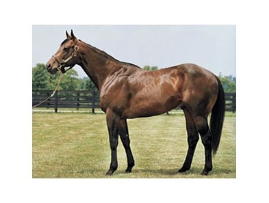 Grade I winner and sire Indian Charlie, one of 4 winners produced from Soviet Sojourn.