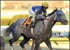 Evening Attire, makes 2004 debut in Aqueduct Handicap.