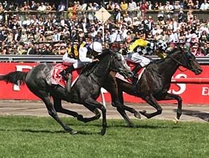 Viewed Wins Melbourne Cup by a Nose