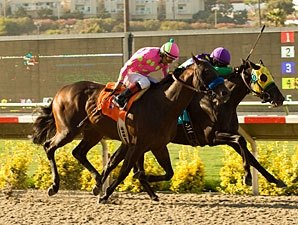 San Luis Rey Pair Right Back for Tokyo City