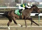 Pompeii, ridden by Javier Castellano, captures The Rare Treat Handicap at Aqueduct on Monday's holiday card.