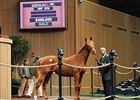 Hip 379 sold for $300,000.