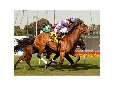 Quiet Oasis won the Wilshire Handicap on April 29.