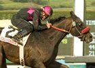 Lava Man Starts New Year in 'Millions Turf