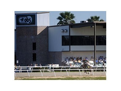 The Juvenile selling season begins at OBS on Feb. 12.