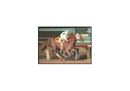 Habibti winning the 2001 running of the Hollywood Starlet Stakes.