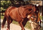 "Forty Niner, in 1989 photo.<br><a target=""blank"" href=""http://www.bloodhorse.com/horse-racing/photo-store?ref=http%3A%2F%2Fpictopia.com%2Fperl%2Fgal%3Fgallery_id%3D6826%26process%3Dgallery%26provider_id%3D368%26ptp_photo_id%3D445744%26sequencenum%3D%26page%3D"">Order This Photo</a>"