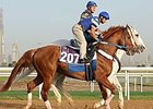 Curlin Has First Gallop in Dubai