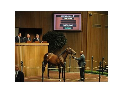 Hip 2248; colt; Indian Charlie - Touched by Touch Gold, brought $400,000 to lead the way on the Sept 15 session of the Keeneland September yearling sale.