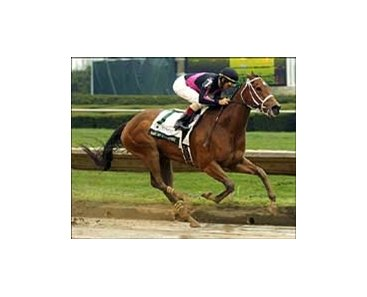 Madcap Escapade winning the Vinery Madison Stakes.