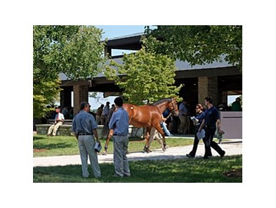 The 2008 Keeneland September Yearling Sale