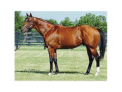 Posse, the leading freshman sire of 2007
