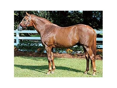 Grade I Winner Lion Tamer's First Foal Born in Louisiana.
