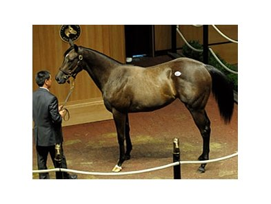 Wicked Exchange Hip 441 Rate Wickedly Wise By Tactical Cat