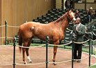 Lady Alexander was the most expensive horse of the third session of the Keeneland November breeding stock sale, selling for $410,000.