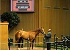 Vallenzeri brings $1.9 million during the first session of the Keeneland 2-year-old sale.