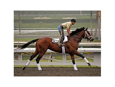 "Quality Road training at Santa Anita before the Breeders' Cup.<br><a target=""blank"" href=""http://www.bloodhorse.com/horse-racing/photo-store?ref=http%3A%2F%2Fpictopia.com%2Fperl%2Fgal%3Fprovider_id%3D368%26ptp_photo_id%3D8621664%26ref%3Dstory"">Order This Photo</a>"