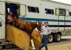 "Derby hopeful Circular Quay disembarks at Churchill<br><a target=""blank"" href=""http://www.bloodhorse.com/horse-racing/photo-store?ref=http%3A%2F%2Fpictopia.com%2Fperl%2Fgal%3Fgallery_id%3D14779%26sequencenum%3D0%26provider_id%3D368%26process%3Dgallery%26page%3Dthumbnails"">Derby Works Photos</a>"