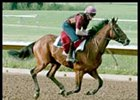 Johannesburg the 2001 champion begins his sprint career in the July Cup.