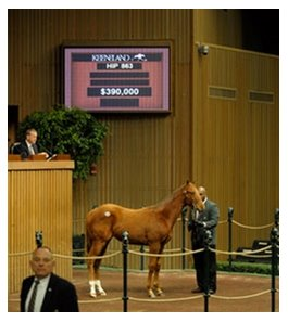 Hip 863; C Maria's Mon-La Cucina brought $390,000 on day 3 of the Keeneland January horses of all ages sale.