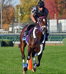 Majestic City Favored in Deep Juvenile Turf
